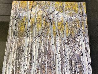 Mountain Aspen   Gallery Wrapped Canvas