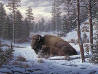 22x32   R W Hedge  The Guardian Buffalo  Canvas Art   Retail 99 49