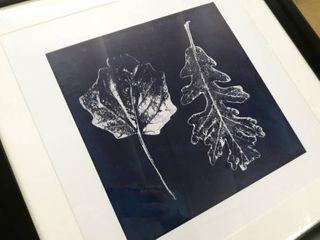Cyanotype Oak leaves  Framed Giclee Print