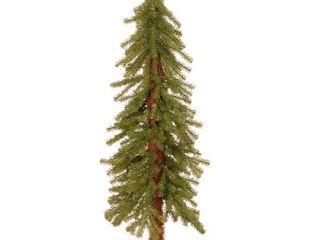National Tree Hickory Cedar Tree  4 Feet