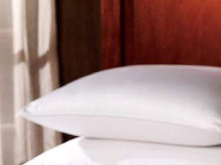 King   1221 Bedding Premium luxury German Batiste Siberian Goose Down Pillow   White   Retail 233 99