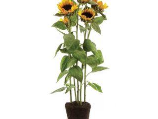 Sunflower Drop in Flowering Plant