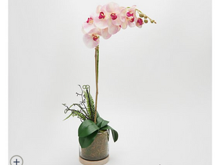 Real Touch Orchid Plant in a Wooden Moss Vase by Peony   Soft Pink