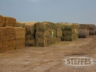 02 Hay   Forage  litchfield  MN  6 11 13 197 JPG