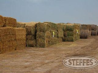 02 Hay   Forage  litchfield  MN  6 11 13 197 JPG