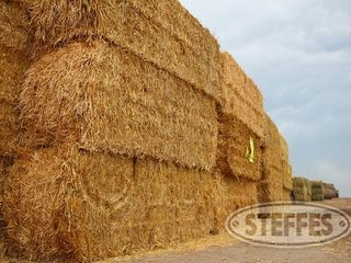 06 Hay & Forage (Litchfield, MN) 6_11_13 203.JPG