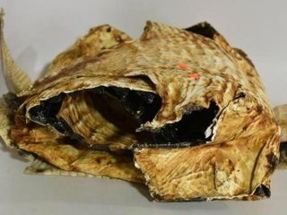 Lot #1 -(2) alligator skins approx. 100? and