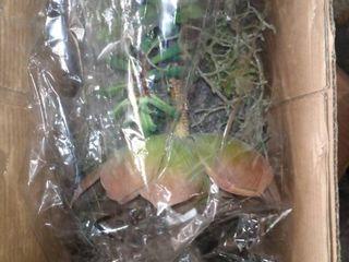 Succulent Green Hanging Aloe