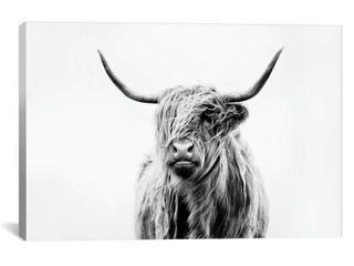 iCanvas Portrait of A Highland Cow by Dorit Fuhg Canvas Print Retail 109 49