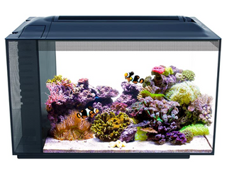 Fluval Sea Evo Saltwater Kit