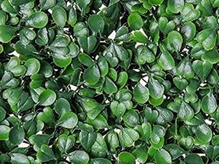 Artificial Topiary Hedge Plant Privacy Fence Screen Panels for Both Outdoor or Indoor  Garden or Backyard Decorations  12 PC Pack  20x20 inch Artificial DarkGreenBoxwood hedge  12pc