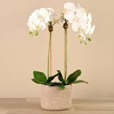 Bloomr Faux Flora Orchid Arrangement