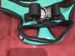Small Teal Dog Pet harness