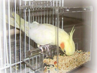 TIDY SEED NO MESS BIRD FEEDER