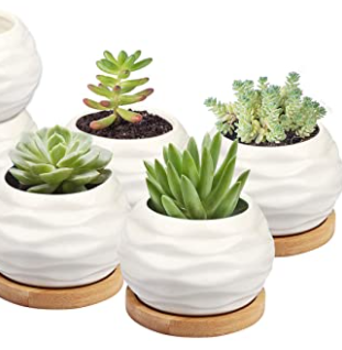 Sun E Perfect Gift Idea Flower Pot