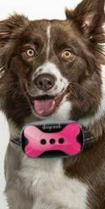DogRook Rechargeable Dog Bark Collar   Humane  No