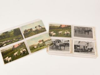 GROUPING OF 8 CITY DAIRY POST CARDS   PICTURES