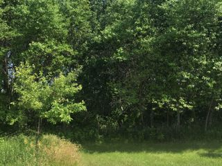 Forested Vacant Lot on Lakeshore Dr, Escanaba