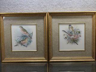 lot of 2 Song Birds   Art Prints   J  G  Keulemans   Gold Tone Wood Frames   14 5  x 15 25