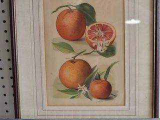 Blood Orange and Tangerine   Print   J  Wright   Vintage Wood Frame   14  x 17