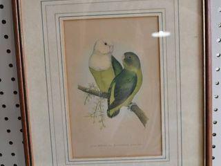 Parrots   Wood Block Print   Fawcett 1886   Vintage Wood Frame   12 25  x 15 5