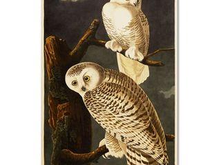 Trademark Fine Art Snowy Owl Artwork by John James Audubon  22 by 32 Inch