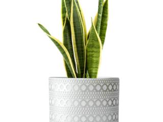 D vine Dev Design Pot 4Inch Design Terracotta Pots