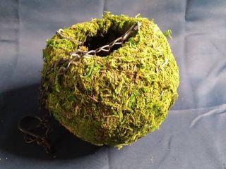 Hanging Moss Ball Planter
