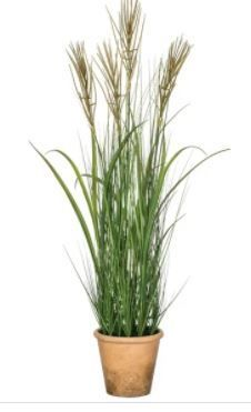 Potted Silver Grass   41 in  H