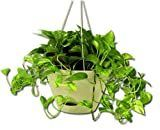 3 Misco HP254 072 Flare Hanging Planter  12 Inch  latte