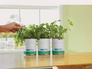 3  Back to the Roots   Kitchen Herb Garden In A Can   3 Pack