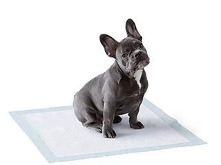 Amazon Basics Dog and Puppy leak proof 5 layer Potty Training Pads with Quick dry Surface  Regular  22 x 22 Inches    Pack of 100