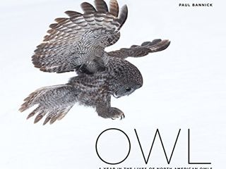 Owl  A Year in the lives of North American Owls