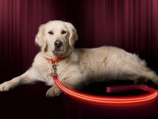 lED Dog Collar   USB Rechargeable   Available in 6 Colors   6 Sizes   Makes Your Dog Visible  Safe   Seen