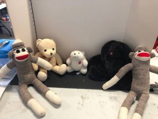 Assorted stuffed animals  toys
