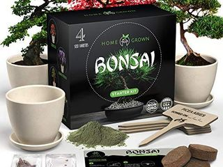HOME GROWN Bonsai Tree Kit  Bonsai Tree Starter Kit with 4 Seeds Types  incl  Purple Bonsai Tree  Indoor Growing Plant Gifts for Moms Who Have Everything  Seed Starter Kit for Kids  DIY Adult Crafts