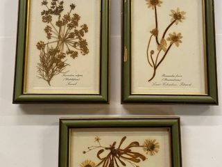 Set of  3  framed natural dried flowers in Suffolk  England for Culpepper the Herbalists