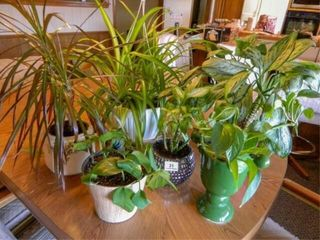 Plant Assortment   6