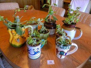 Plant Assortment   8