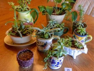 Plant Assortment   9