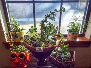 Succulent Plants  7