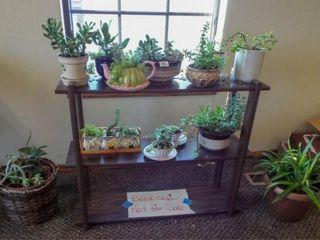 Succulent  Green Plants  18