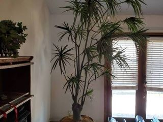 Giant Faux Tree   Over 10 Feet Tall