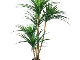 Pure Garden 51  Yucana Tree