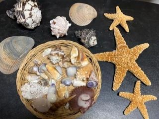 SEASHEllS AND STAR FISH