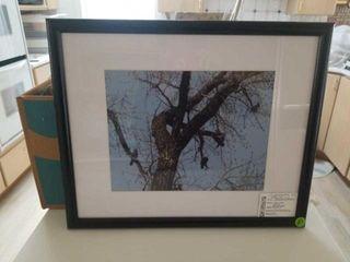 CORMORANTS IN TREE AT CRYSTAl SPRINGS  BY JOYCE