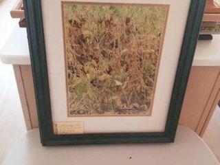 1997 SOYBEAN CROP  BY JOYCE PRINCE