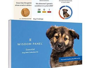 Wisdom Panel Essential  New and Improved Dog DNA Test for Ancestry  Traits and Medical Complications