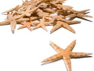 Starfish Assortment  30Pc    Craft Supplies   30 Pieces