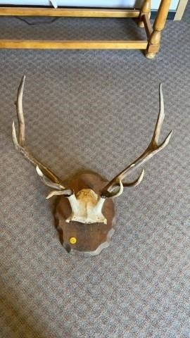 10 POINT MOUNTED ANTlERS